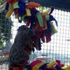 espiral.arco.íris.Toca.do.Furão.2