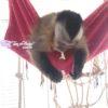 rede.de.soft.macaco.tocadofurao.1