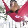 rede.de.soft.macaco.tocadofurao.2