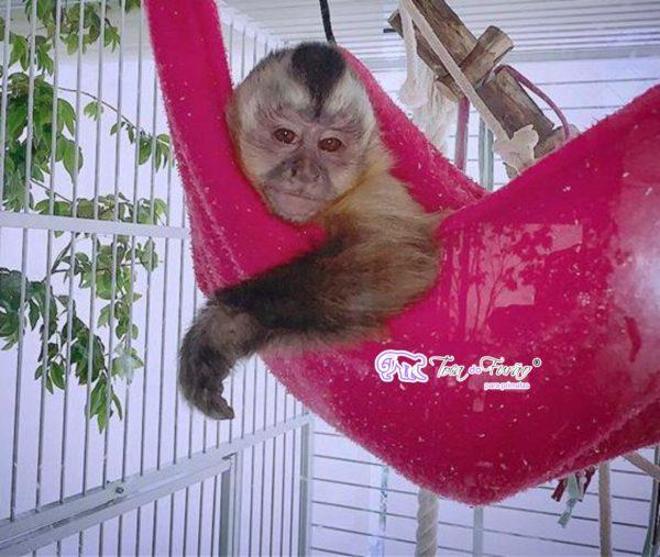 rede.de.soft.macaco.tocadofurao.3