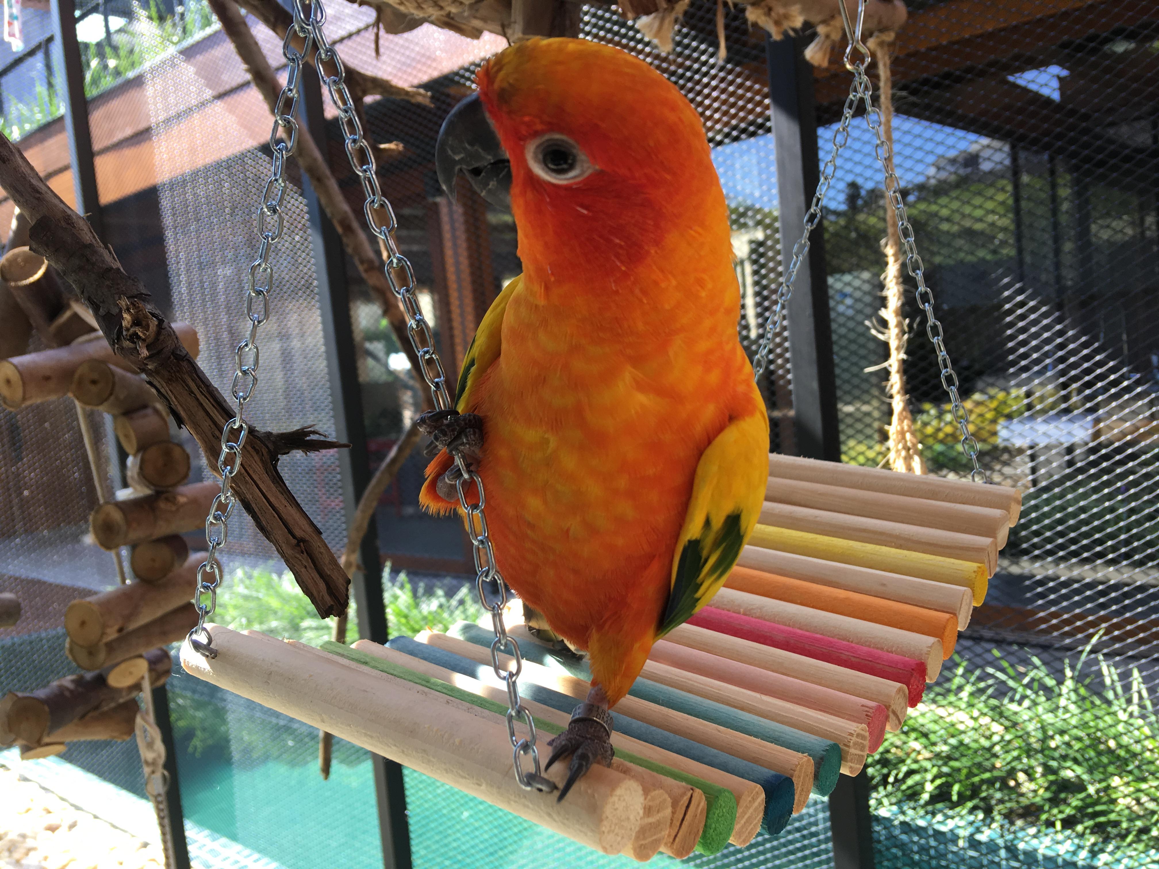 265a9c06bb75d Rede de madeira color para aves – Toca do Furão